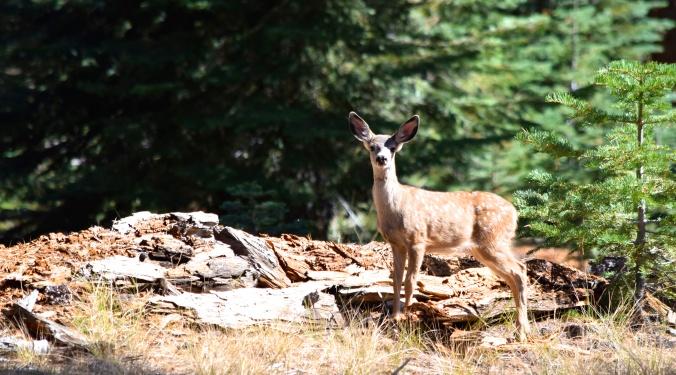 La faune de Yosemite