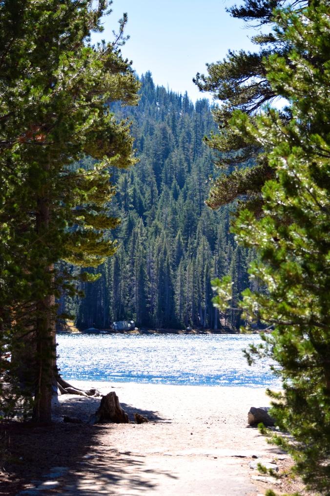 Tenaya lake sur la Tioga road direction Yosemite