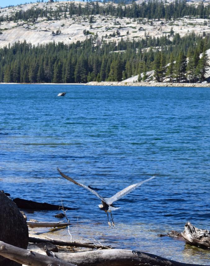 La faune à Yosemite